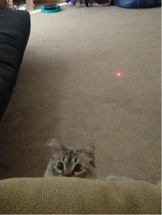 Trò dùng đèn laser dụ mèo đã xưa rồi.(Ảnh: Viral Nova)