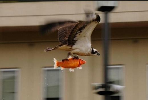 """""""Các anh đang đóng lại phim Finding Nemo đấy, các chú thấy có ngầu không?"""".(Ảnh: Viral Nova)"""