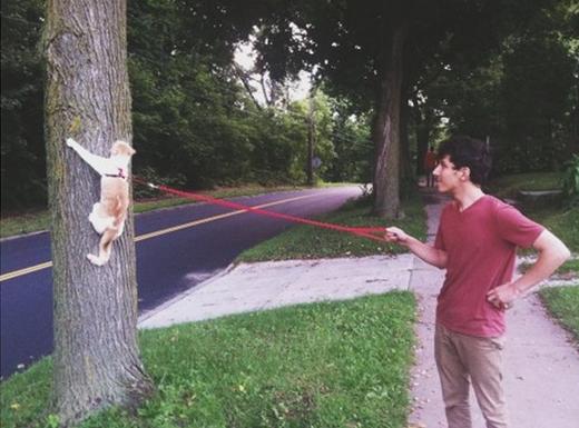 Khi mèo rơi vào tay đàn ông...(Ảnh: Viral Nova)