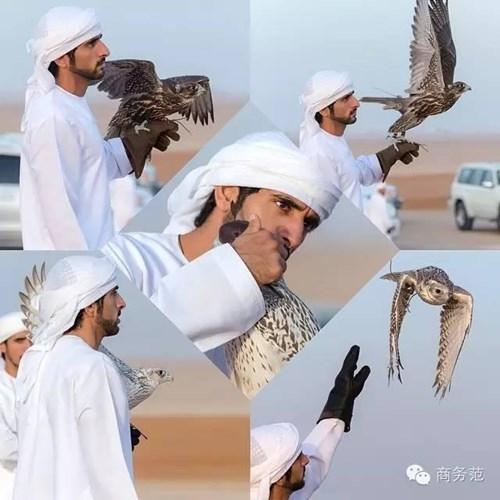 Hoàng tử Hamdan bin Mohammed bin Rashid al Maktoum con cú trong một chuyến đi săn của mình.
