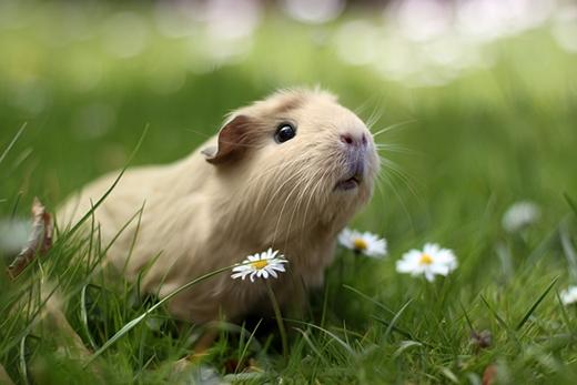 Gặp gỡ nàng chuột lang làm náo loạn cộng đồng mạng