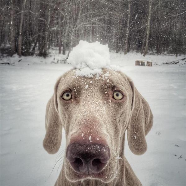 Tuyết, có tuyết rồi, vẫy vùng thôi.(Ảnh: Bored Panda)