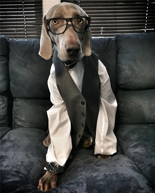 Chuẩn bị cho buổi phỏng vấn xin việc làm.(Ảnh: Bored Panda)