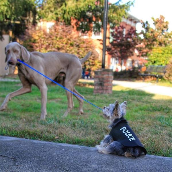 Cún dắt cún đi dạo, bạn đã thấy cảnh tượng này bao giờ chưa?(Ảnh: Bored Panda)