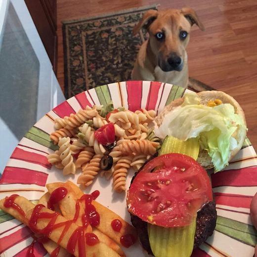 """""""Chế, chế chụp hình đi, đưa dĩa đồ ăn xuống đây em giữ cho"""". (Ảnh: BuzzFeed)"""