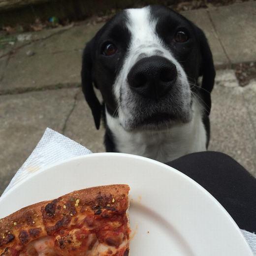 """""""Pizza ư? Em thèm! Cho em một miếng đi!"""". (Ảnh: BuzzFeed)"""