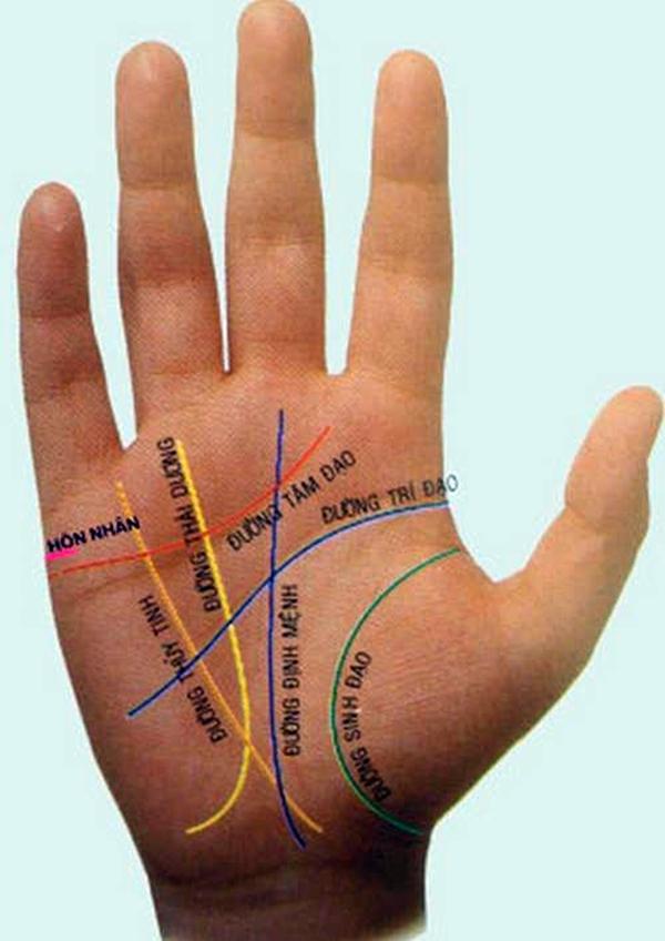 Hình ảnh của các đường chỉ tay trên bàn tay. (Ảnh: Internet)