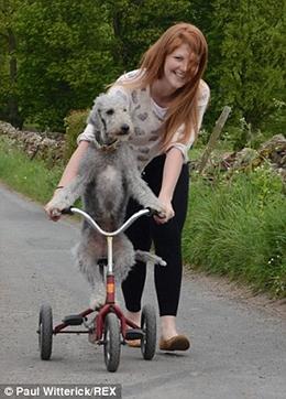 Dân mạng phát cuồng với chú chó lái xe đạp, lướt xe hơi thần sầu