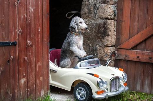 Barry tự mình lái xe ra khỏi ga-ra cho một cuộc dạo chơi trong thị trấn. (Ảnh: Internet)