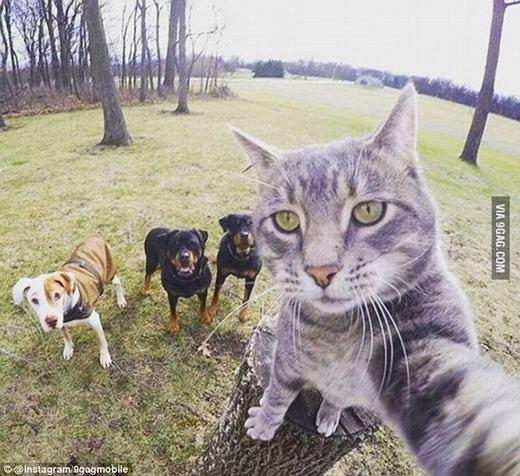 """Bức ảnh chú mèo """"tự sướng""""đang """"gây bão"""" cộng đồng mạng. (Ảnh: Instagram)"""