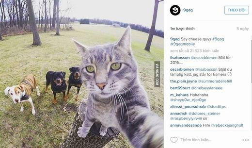 """Chú mèo khiến cộng đồng mạng """"phát cuồng"""". (Ảnh: Chụp màn hình)"""