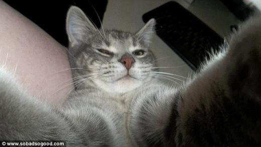 """Phát cuồng với chú mèo được mệnh danh là """"thánh tự sướng"""""""