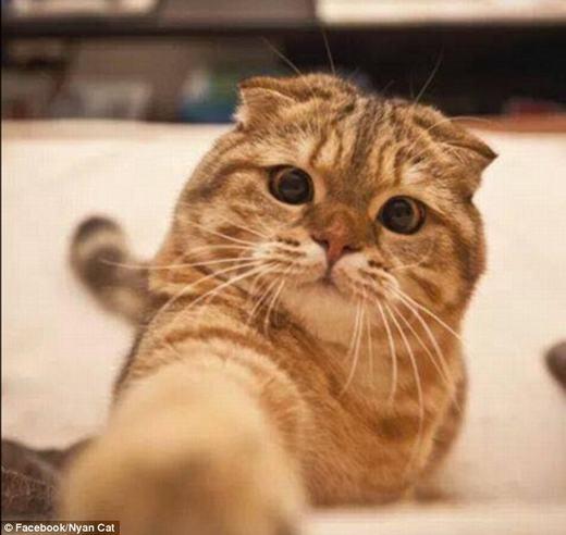 """""""Những chú mèo thíchtự sướng"""" trước đó. (Ảnh: Internet)"""