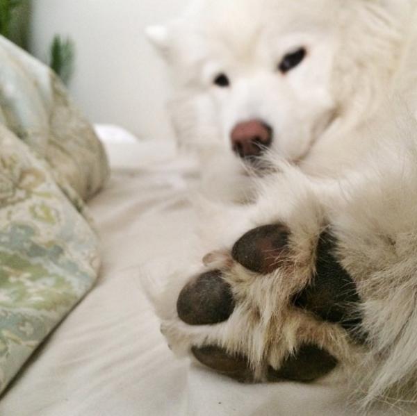 9. Bàn chân nhỏ nhắn êm êm này cũng là một lý do để yêu thương.