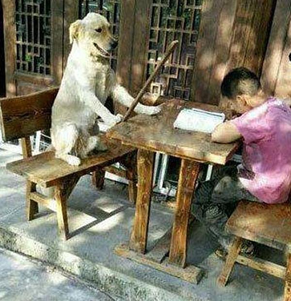 """Cố gắng học hành còn """"quang tông diệu tổ"""" nữa chứ. (Ảnh: Internet)"""