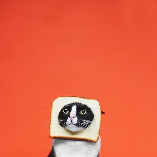Và sau đây là loạt ảnh biến hóa mang tên: The Face. Một chiếc bánh mì mèo chăng?(nguồn IG:princesscheeto)