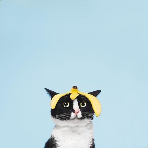 """Chủ của """"nàng mèo"""" lại vứt vỏ chuối lung tung rồi!(nguồn IG:princesscheeto)"""