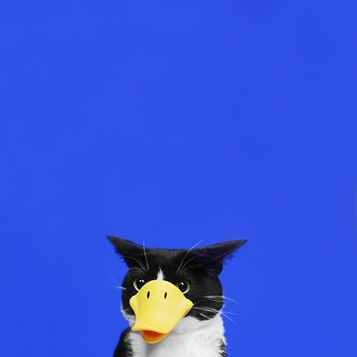 """Mèo... mỏ vịt à?(nguồn IG:princesscheeto)  Không biết chai""""nước chấm mèo"""" này sẽ có vị thế nào đây?(nguồn IG:princesscheeto)"""