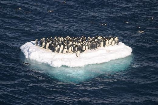 Hiệu ứng nhà kính, khí hậu nóng lên khiến môi trường sống của chim cánh cụt bị thu hẹp. (Ảnh: Internet)