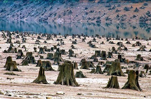Nạn chặt phá rừng ngày càng tăng... (Ảnh: Internet)