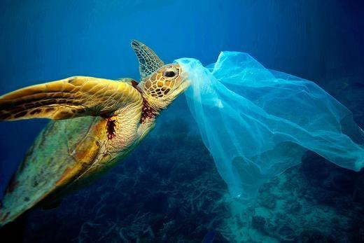 Một chú rùa vướng phải túi nilon. (Ảnh: Internet)