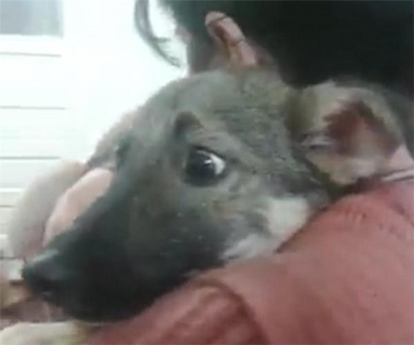 Bật khóc trước phản ứng của chú chó lần đầu được yêu thương