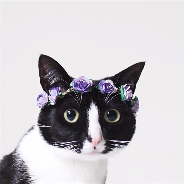 """""""Công chúa mèo""""với đôi mắt long lanh thế nàycó đủ khiến tim bạn tan chảy không? (nguồn IG:princesscheeto)"""
