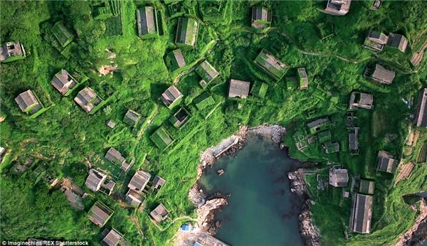 """Ở ngôi làng chài trên đảo Shengshan thuộc tỉnh Chiết Giang, Trung Quốc này, người ta sẽ dễ dàng bị thu hút bởi giàn dây leo xanh mướt phủ khắp các bức tường đá, """"đột nhập"""" vào nhà qua cửa sổ, vắt vẻo ở cửa chính và trải dọc lối đi ngoằn ngoèo.(Ảnh: Daily Mail)"""