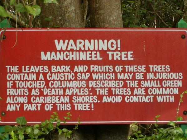 Cận cảnh loài cây nguy hiểm nhất hành tinh: Chỉ đứng cạnh cũng chết.4