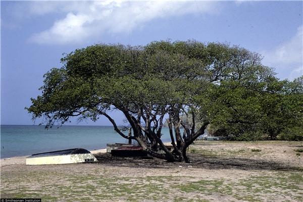 Cận cảnh loài cây nguy hiểm nhất hành tinh: Chỉ đứng cạnh cũng chết.9
