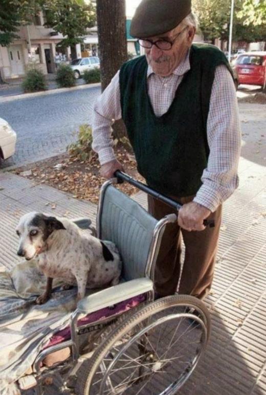 Cụ già này và chú chó cưng đã bầu bạn với nhau suốt nhiều năm qua. Khi chú chó không thể đi lại được nữa, cụ đã đẩy xe đưa chú đi chơi hàng ngày. (Ảnh: Internet)