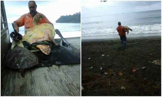 Người đàn ông này mua lại chú rùa từ những ngư dân rồi thả chú về biển khơi. (Ảnh: Internet)