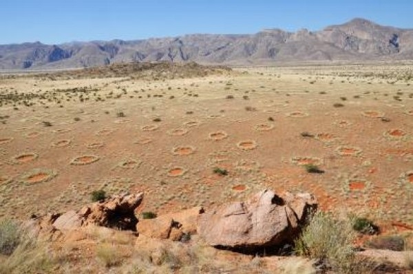 Tiếp tục một giả thiết khác được đưa ra là có chất độctrong các loài cây tại sa mạc. Cây cỏ và mẫu đất trong sa mạc được đưa về phòng thí nghiệm. Tuy nhiên một lần nữa giả thuyết này tiếp tục bị bác bỏ, vì cây cỏ đã sống tốt. Ảnh: Internet