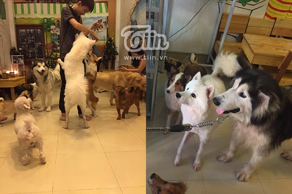 Hiện tại quán có 13 chú cún cưng.