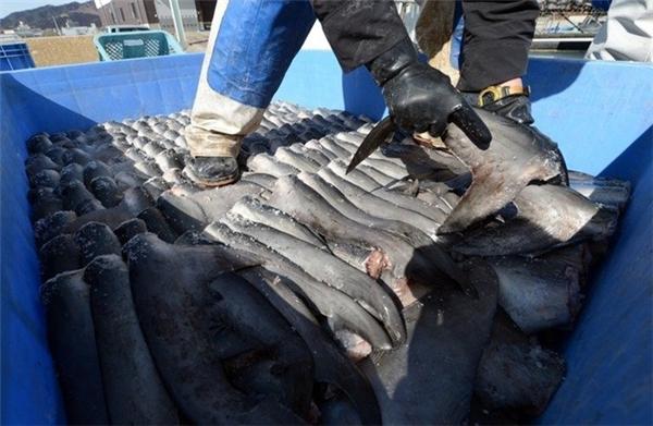 Vây cá mập sau khi được cắt. (Ảnh: Internet)
