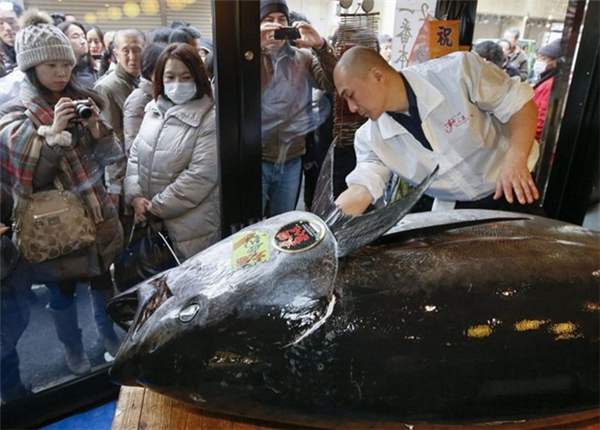 Cận cảnh cá ngừ bị làm thịt. (Ảnh: Internet)