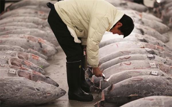 Chợ Tsukiji (Ảnh: Internet)
