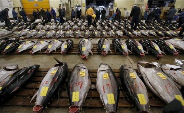 Bán đấu giá cá ngừ. (Ảnh: Internet)