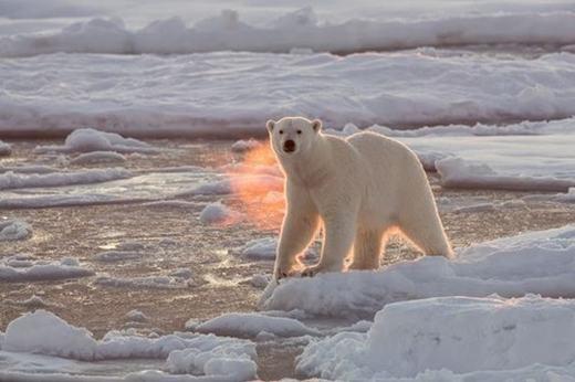 Nhưng thực chất, đây chỉ là sự kết hợp của ánh sáng mặt trời và hơi từ miệng chú gấu.
