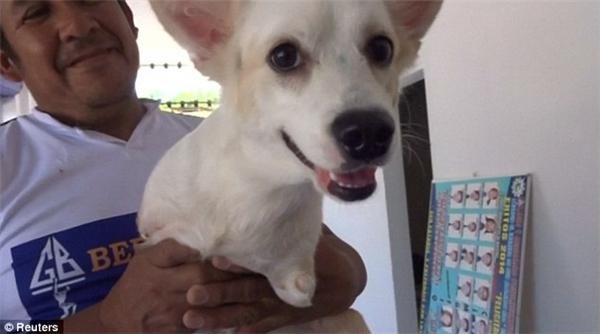 Cực độc: chú chó sống kiếp kangaroo lạc quan nhất quả đất