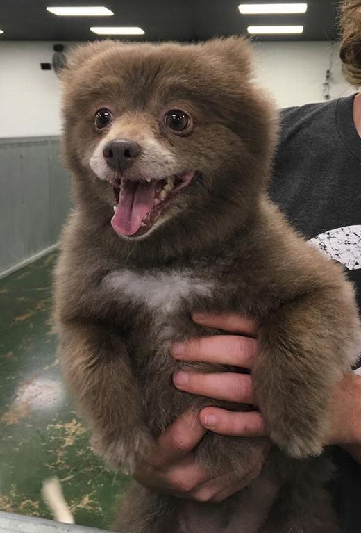 1. Mở màn với Bounce, nhân vật khởi xướng trào lưu gấu chó khi tấm ảnh đáng yêu này được chia sẻ trên mạng xã hội Reddit.