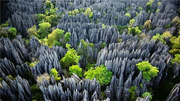 Khi nhìn từ trên cao, công viên Tsingy de Bemaraha mang vẻ đẹp độc đáo với hàng nghìn phiến đá vôi sắc nhọn nằm san sát nhau như một bàn chông hoàn hảo của tạo hóa. Chúng được hình thành do bị nước biển ăn mòn và trở nên sắc như dao cạo. Nhưng đây cũng là một rào cản lớn cho việc nghiên cứu, bởi các nhà khoa học chỉ đến khảo sát 1 lần và rất ít người quay trở lại.(Ảnh: Internet)
