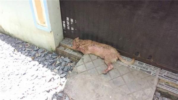 Kiki kiên nhẫn nằm đợi trước ngôi nhà từng là mái ấm của mình... (Ảnh: Facebook)