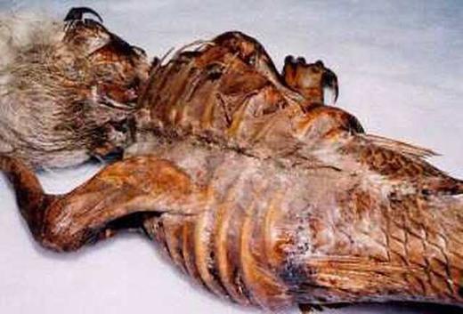 Bộ xương người cá này được cho là trôi dạt vào bờ biển Ấn Độ sau sóng thần.(Ảnh: Internet)