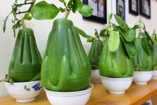 Mỗi trái bưởi bàn tay Phật được bán với giá khoảng 600.000 đồng/quả. (Ảnh: Internet)