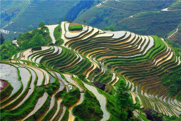 Ruộng bậc thang ở Quý Châu (Trung Quốc) nằm ở vị trí 44.Ảnh:New York Times