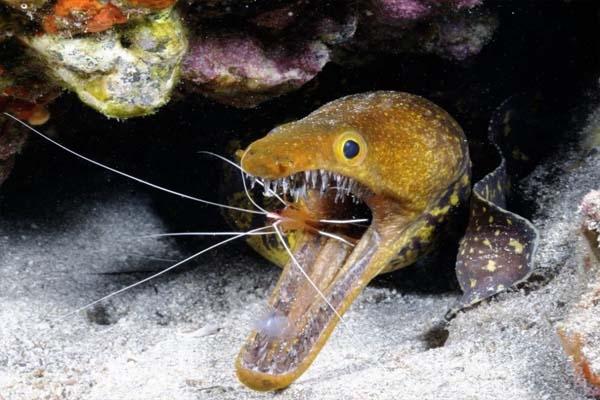 Bật mí về những loài thủy quái 'ăn thịt người'