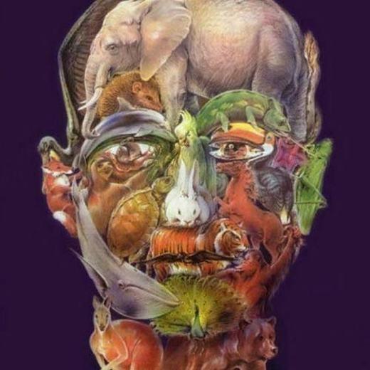 3. Bạn tìm thấy bao nhiêu loài thú trong khuôn mặt người này?