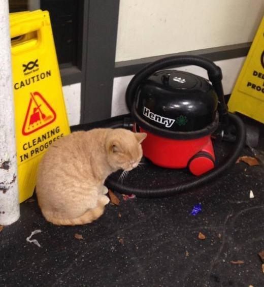 """Khâm phục chú mèo """"bảo vệ không công"""" nhiều năm cho siêu thị"""