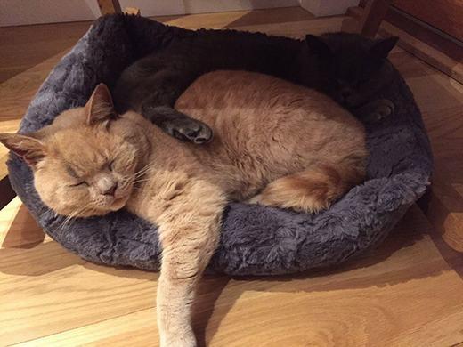 Chú mèo sống với bạn mình ở gần siêu thị. (Ảnh: Bored Panda)